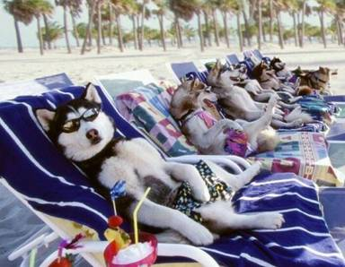 Adivinar peliculas por imagenes =) Snow%2520dogs