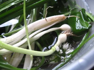 Gathering Wild Irish Garlic by Saeid @ What's for Dinner?