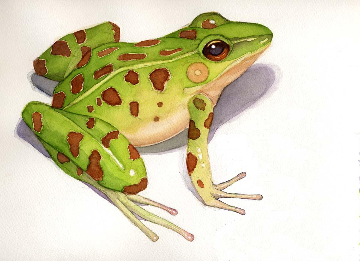 [frog+A.jpg]