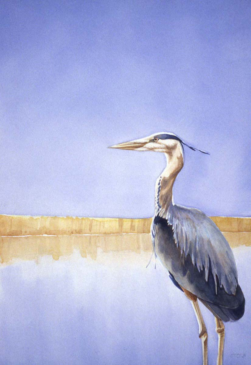 [Great+Blue+Heron+copy.jpg]