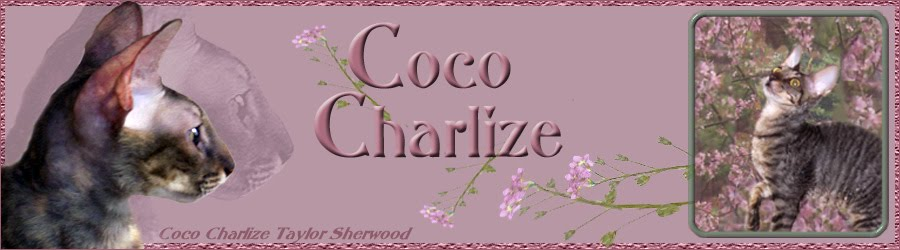 Coco Charlize Taylor Sherwood