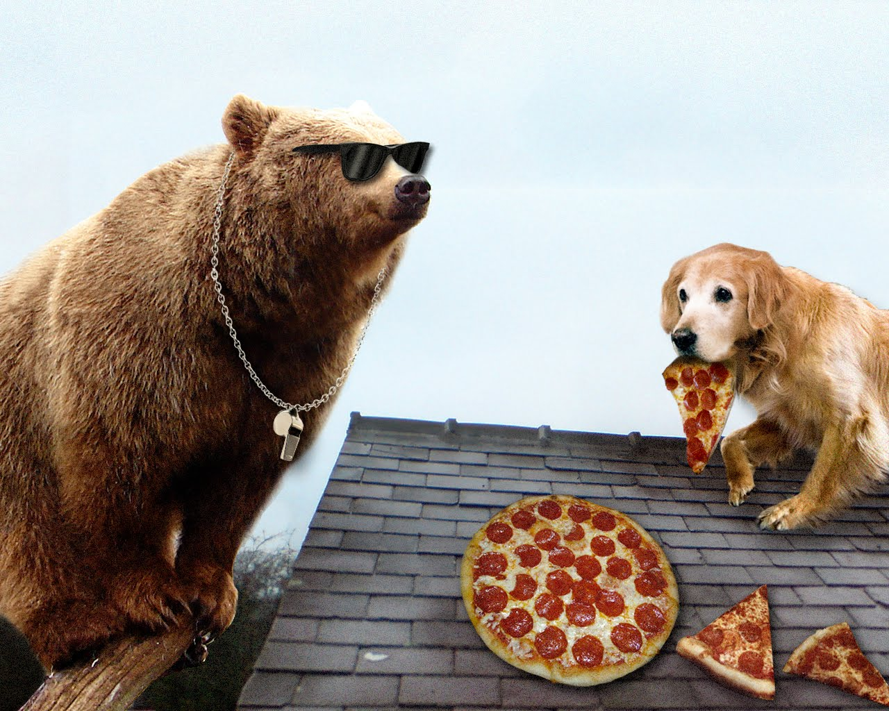 Friday Afternoon Pizza Party! - Page 2 100819_KoolytheBearfindsDogsSecretRoofPizza