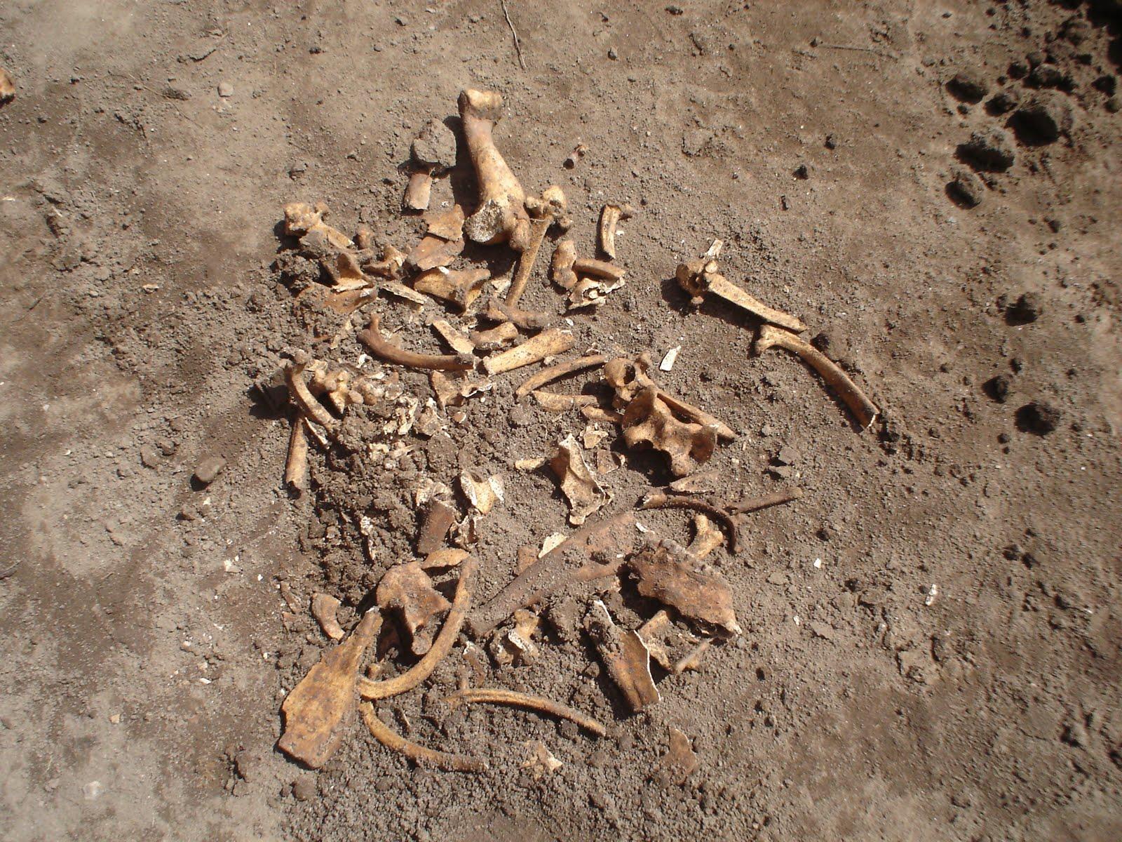 Crushed Skull A crushe...