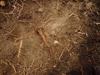 Mullan alta - blogini arkeologiasta