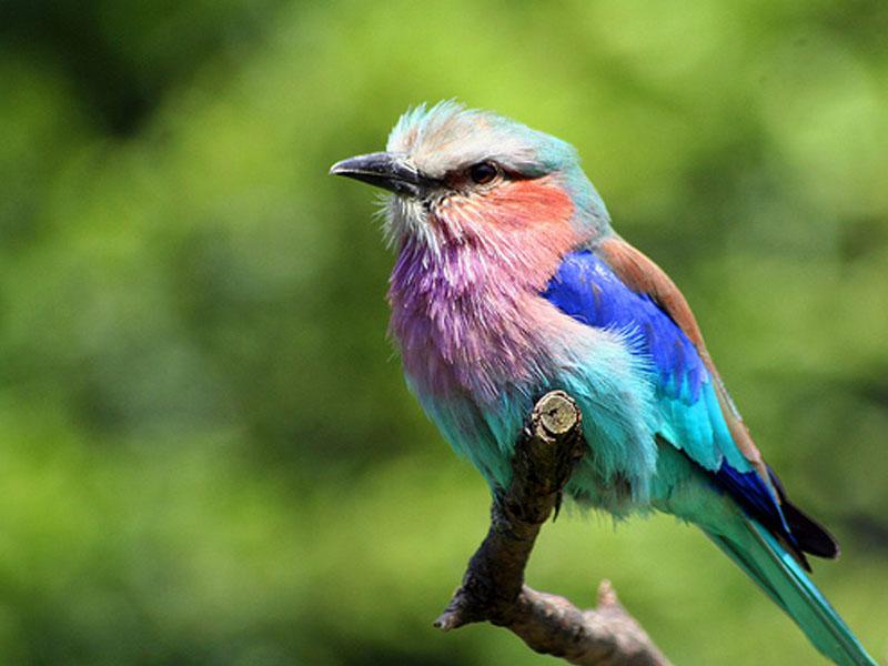The Life of Sweet Birds: GREAT BIRD PHOTOS