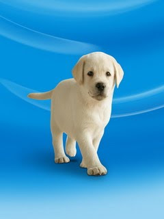 samsung corby wallpaper free download cute puppy