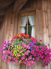 Alma de Flores ...