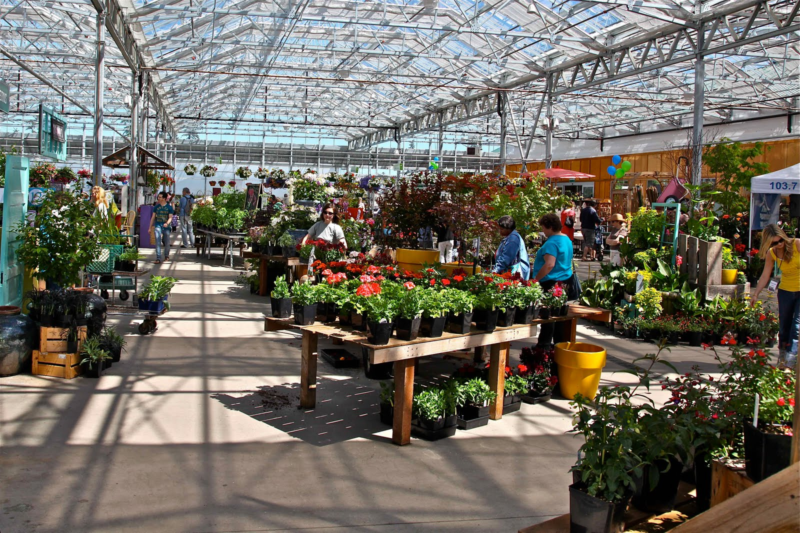 Sky Nursery Held Its Official Grand Opening And Customer Reciation Day On June 12 Celebrating Beautiful Gl Greenhouse New E As Well