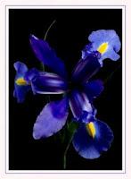 Líro Azul símbolo de Afeto blog Coisa da Minha Vida
