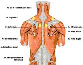 muskelknut i ryggen