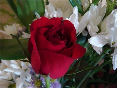 10 tipos de flores (imagenes) Taringa! - Imagenes De Todo Tipo De Rosas