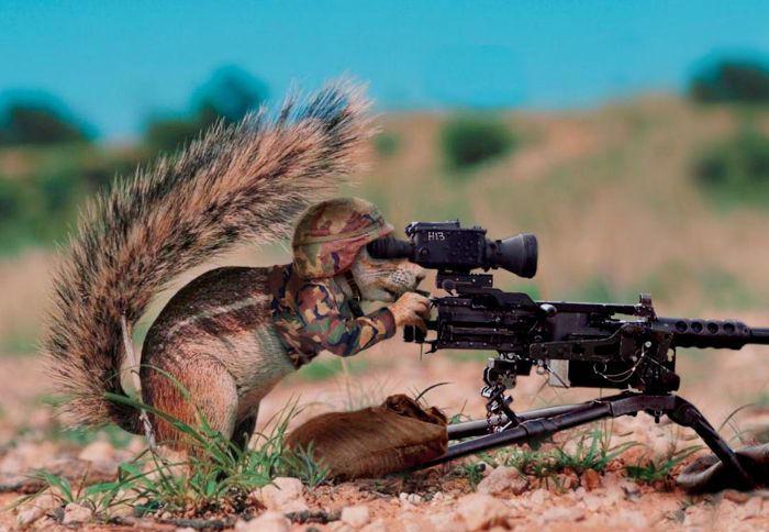 http://3.bp.blogspot.com/_2gJK0YnojeY/TMN9cHu6iuI/AAAAAAAAADE/Hqi0Iw9_TzE/s1600/army-squirrel.jpg