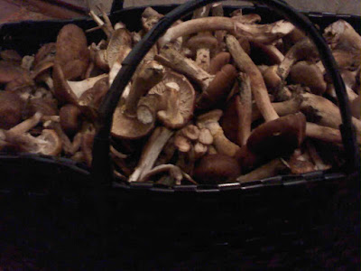 Грибной сезон осторожно грибы