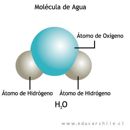 Biomol culas inorg nicas biomol cula inorg nica el agua for Molecula definicion