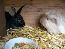 Thumper the rabbit and is nicely sharing Ash the Guinea pig&#39;s hut