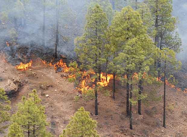 El medio ambiente la quema de los arboles for Medio en el que habitan los arboles