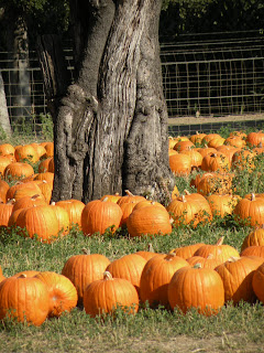 pumpkins at the base of a tree
