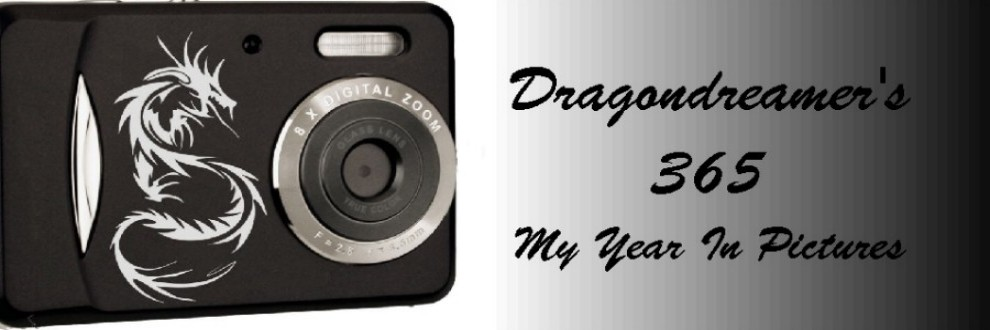 Dragondreamer's 365