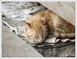 Resultado de imagem para esterilização gatos