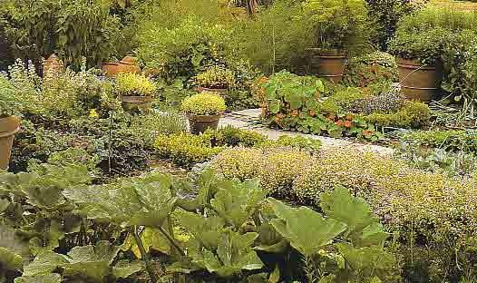 El abc de las plantas online jardin de hierbas aromaticas - Jardin de aromaticas ...