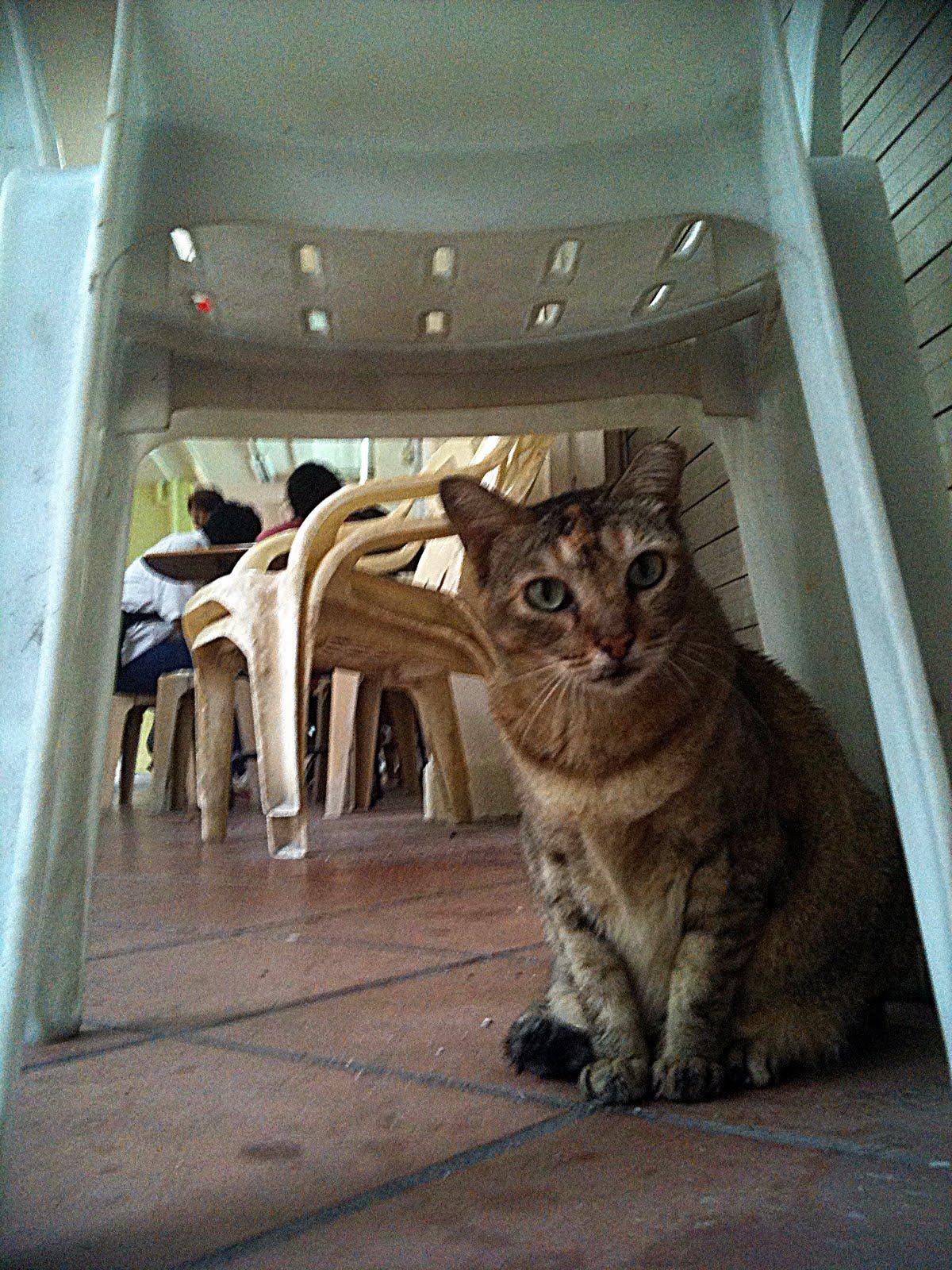 http://3.bp.blogspot.com/_2p4y0FR2tGU/TKCKiR4rYXI/AAAAAAAAEnI/pUNMGOV4IA4/s1600/community-cat_bedok-north_27092010.JPG