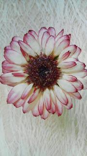 お花をつかったアクセサリー作家レジナさんのブローチ
