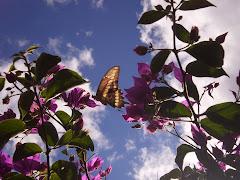 La mariposa ...