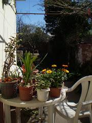 Bienvenida primavera ( patio de la abuela retratado por hija china)