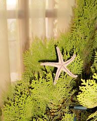 Arbolito Orillero con estrella de mar