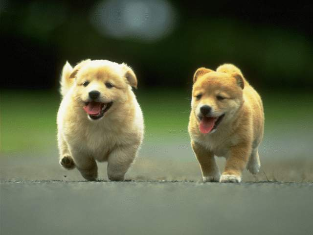 very cute puppies pictures. (pictures of puppies)