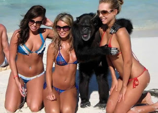 ze mayer macaco esperto