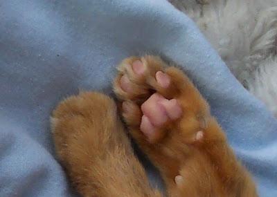 Freida's paws