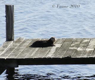 Otter Currituck Sound
