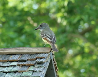 Flycatcher on Box