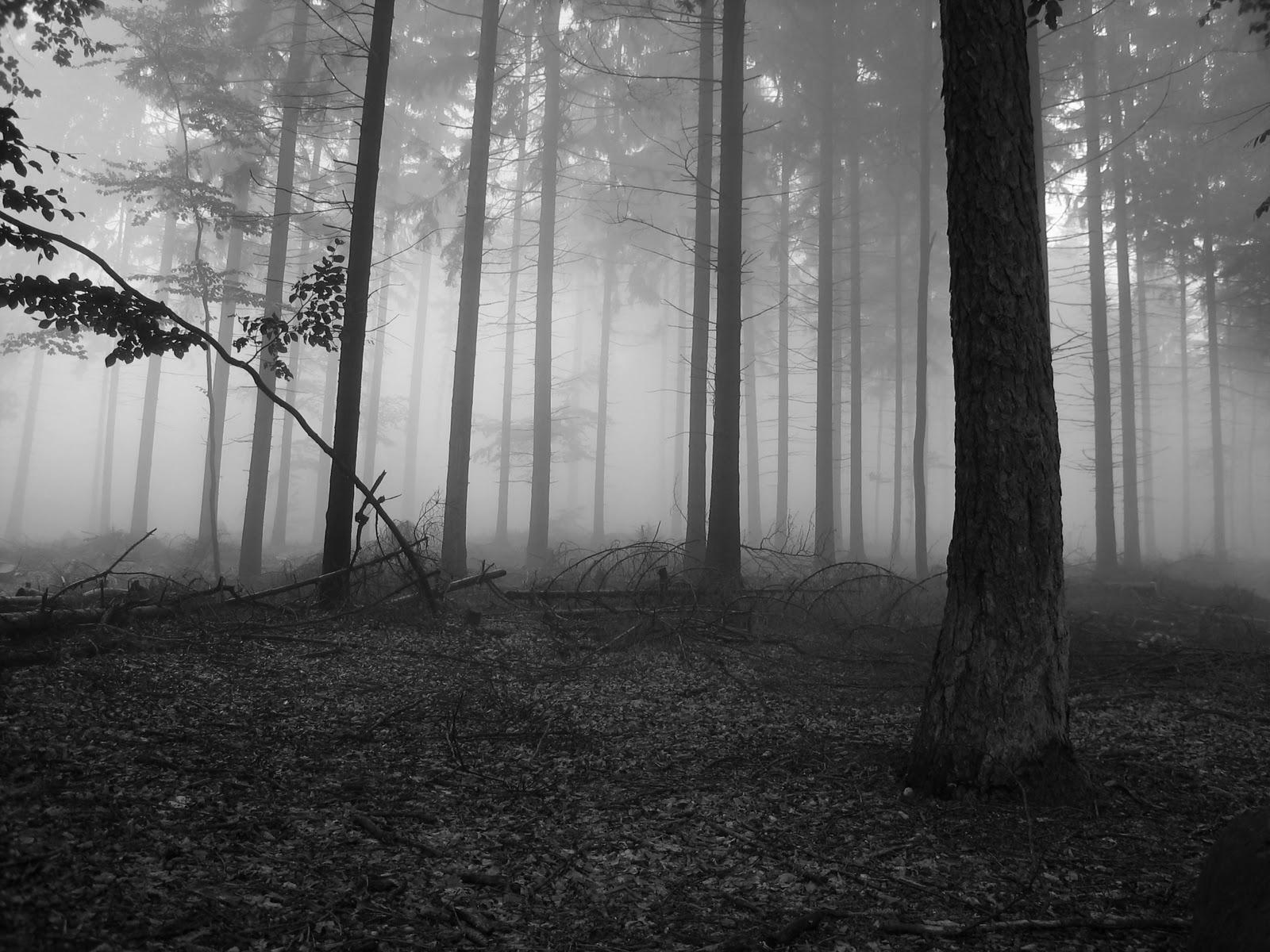 Aufeinandertreffen von Madoka und Mayura [Vergangenheit] Foggy_forest_1_2592
