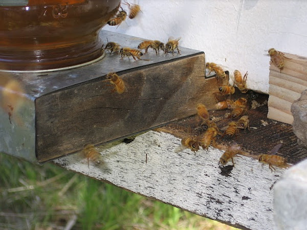 April 9, 2010 - Newly Hived Colony