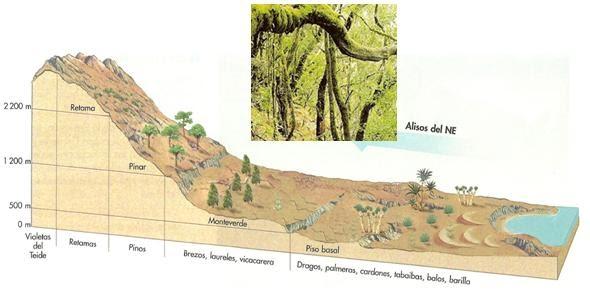 Geoperspectivas pisos de vegetaci n canaria for Pisos de vegetacion canarias