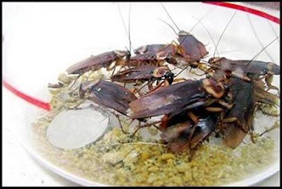 Cockroach Beauty Mask
