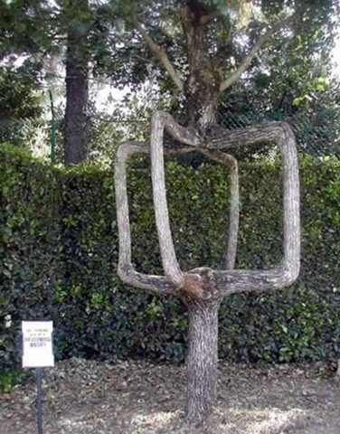 Unusual Trees