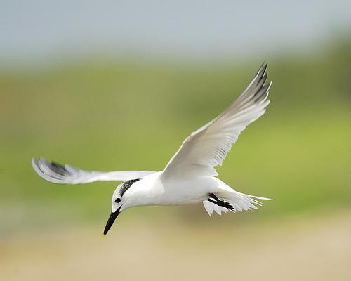 [bird.jpg]