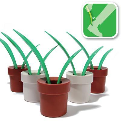 [shoe+horn+plant.jpg]