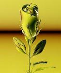 Curso Iniciacion La Rosa Cristica®
