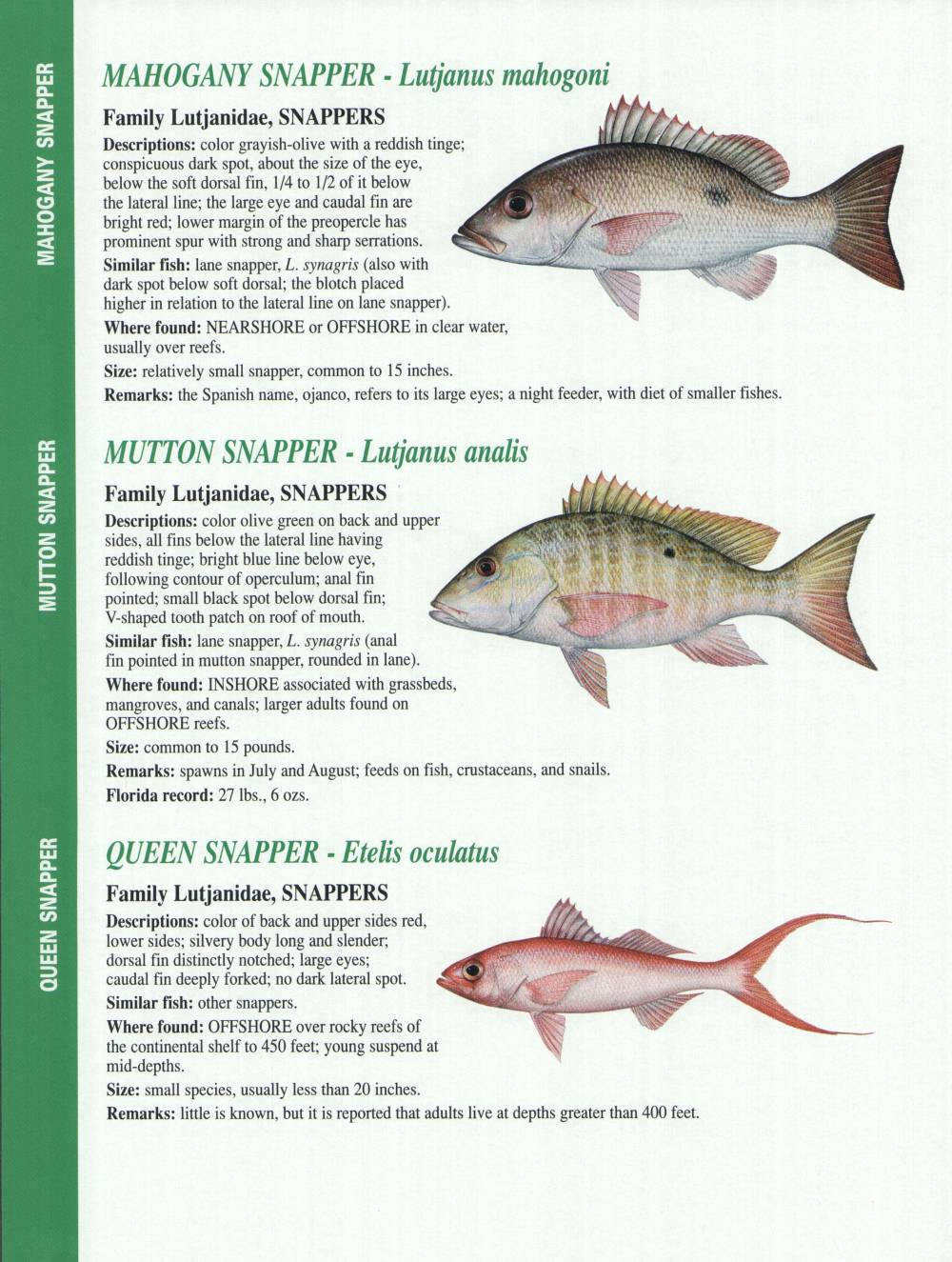 Crystal river fishing report florida gulf fish for Gulf fish species