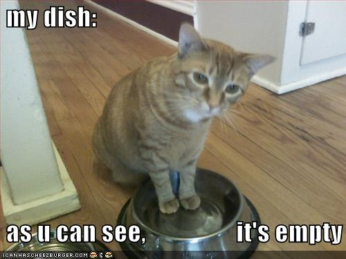 lolcat food