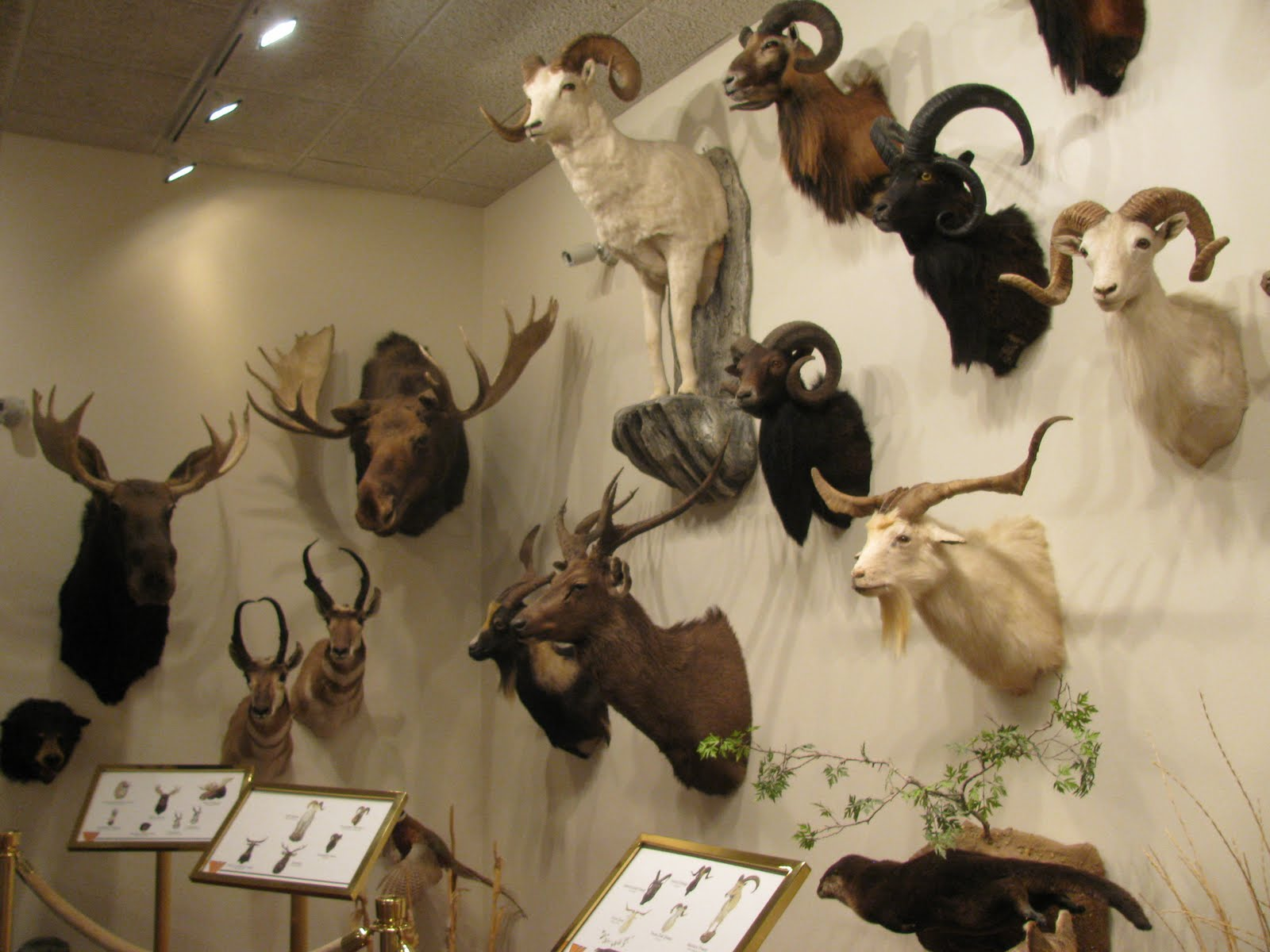Wwcc Natural History Museum