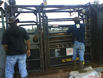 Cattle Crash Hidrolik