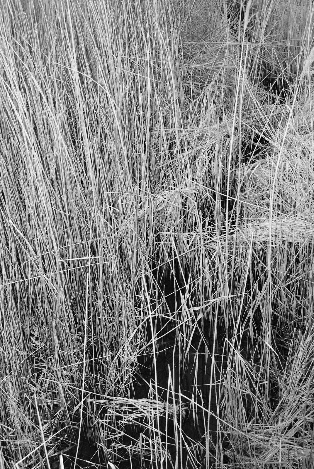 [black_white-reed.JPG]