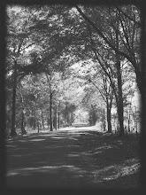 ryan's road...