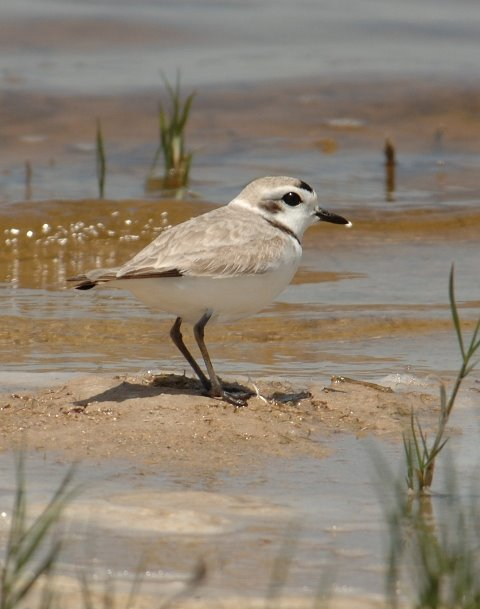 BirdSpert Photos