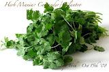 Herb Mania: Coriander